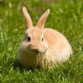 Small Animal