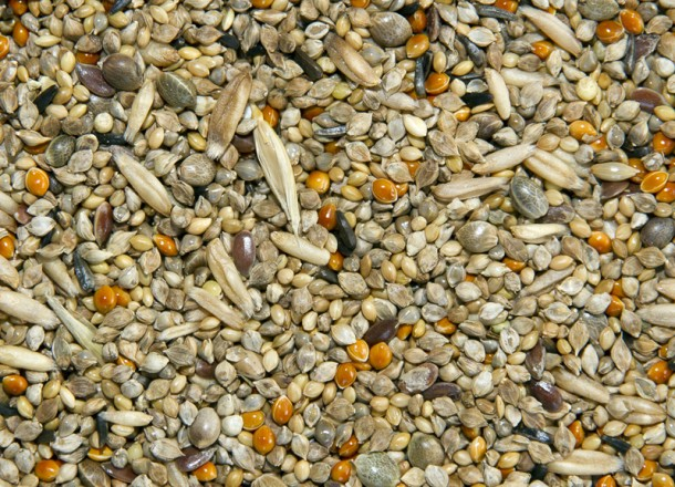 Budgie Tonic Seed