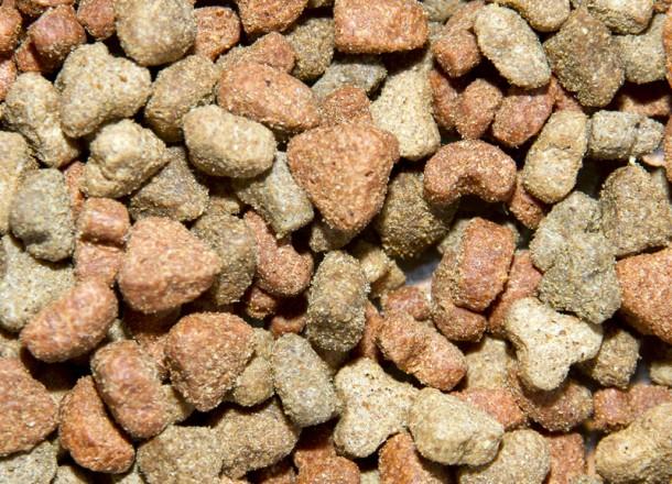 Cat Crunch